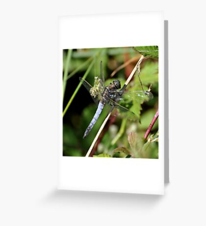 Blue Chaser Greeting Card