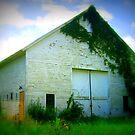 Chinigo White Barn by Debbie Robbins