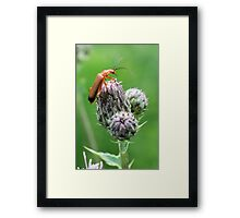 Insect on flower 0001 Framed Print