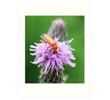 Insect on flower 0002 Art Print