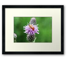 Insect on flower 0003 Framed Print
