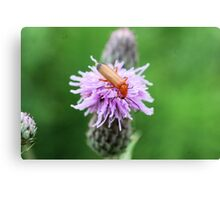 Insect on flower 0003 Canvas Print