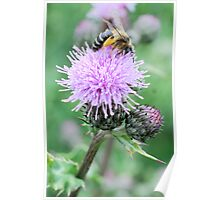 Bee On Flower 0055 Poster