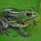 Frog by Jagadeesh Sampath