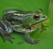 Frog by Jagadeesh Sampath