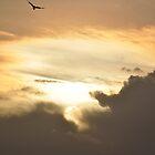 Sky by Jagadeesh Sampath