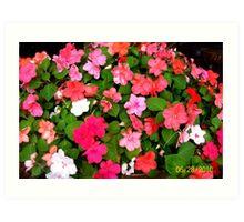 Impatients in my flower garden Art Print