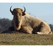 Buffalo of the hill. Photographic Print