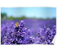 Lavender Fest '09 Poster