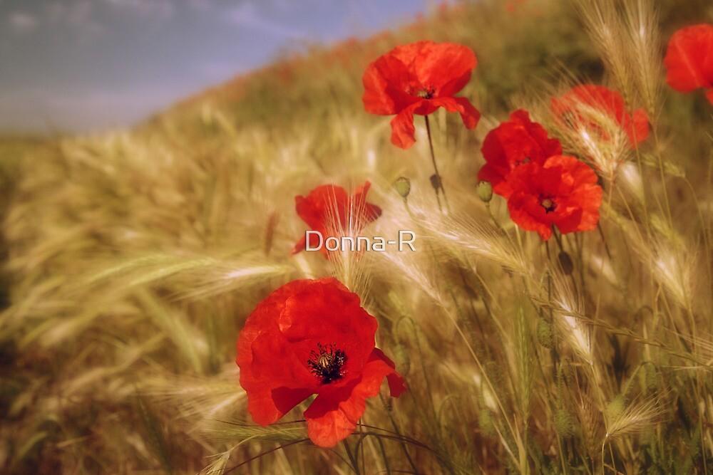 Summer Daze  by Donna-R