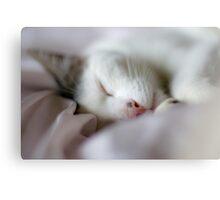 Sleeping Fernando Canvas Print
