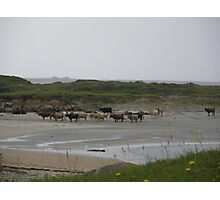 Nude Bathers, Innisfree Island off Donegal Ireland Photographic Print