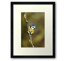 Puff Ball Framed Print