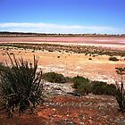 Salt Flats (Lake Miranda), WA Goldfield by sharonjr