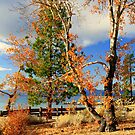 """""""Colors Of Tahoe"""" by Lynn Bawden"""