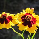 Golden Wild Flowers by teresa731
