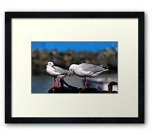 Seagulls Waiting For Lunch Framed Print