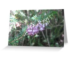 Baby Pink flowers found by chance Greeting Card