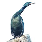 Cormorant on a Post by toby snelgrove  IPA