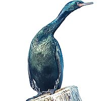 Cormorant on a Post by toby snelgrove  IPA