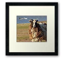 Goat fur. Framed Print