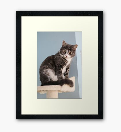 What 'mew Lookin' at? Framed Print