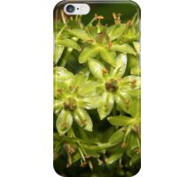 Pineapple Lily iPhone Case/Skin