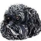 "Cute 'Charlie"" a King Charles Spaniel/Poodle by Trish Loader"
