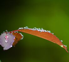 drops aren't heavy by Dinni H