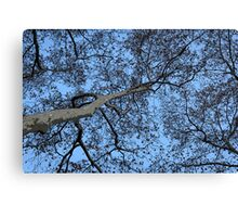 winter tracery Canvas Print