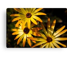 Flower-works Canvas Print