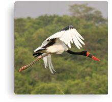 Saddle Bill Stork Canvas Print