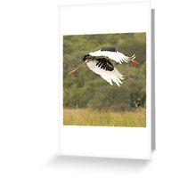 Saddle Bill Stork Greeting Card