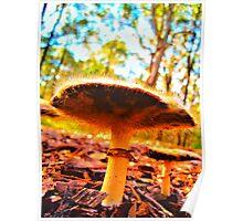 Hairy mushroom - Jesmond bushland Poster