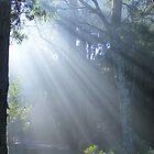 sunrays delight by gaylene