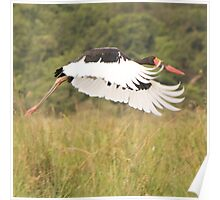 Saddle Bill Stork Poster