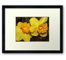 Two yellow daffodils Framed Print