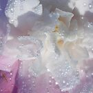 camellia diamond dewdrops by gaylene