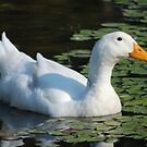 Friendly Duck by Betty Maxey