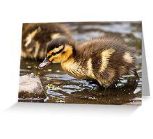 Dabbling duckling Greeting Card