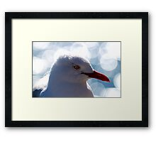 Portrait Of A Red-billed Gull Framed Print