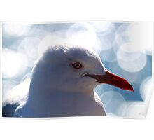 Portrait Of A Red-billed Gull Poster