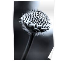 Black and White Seed Poster
