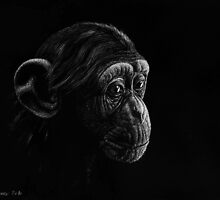 Young chimp by Dietrich Moravec