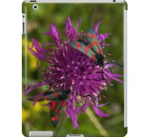 "Greater Knapweed with ""6-spot Burnet"" Moths iPad Case/Skin"