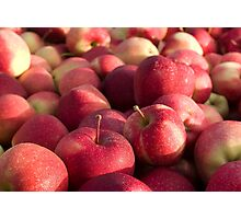 Apple Harvest Photographic Print