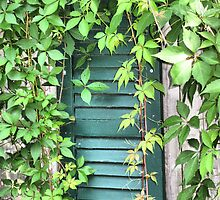 From The Garden...Vine Covered Shutter by SharonAHenson