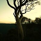 another tree by Matthew  Smith