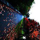 fallen leaves  by Matthew  Smith