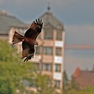 Black Kite by David Freeman